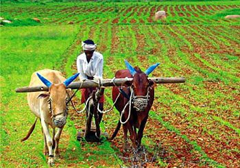 Essay Composition On Indian Agriculture Monsoon And its impact For WBCS Main Exam